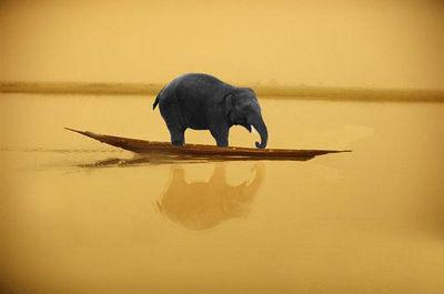 elephant-on-boat